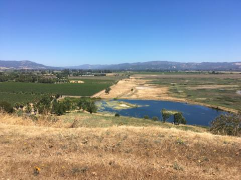 Sonoma Creek Baylands