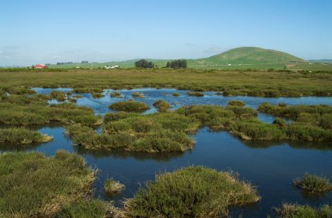 San Pablo Baylands, photo: Stephen Joseph